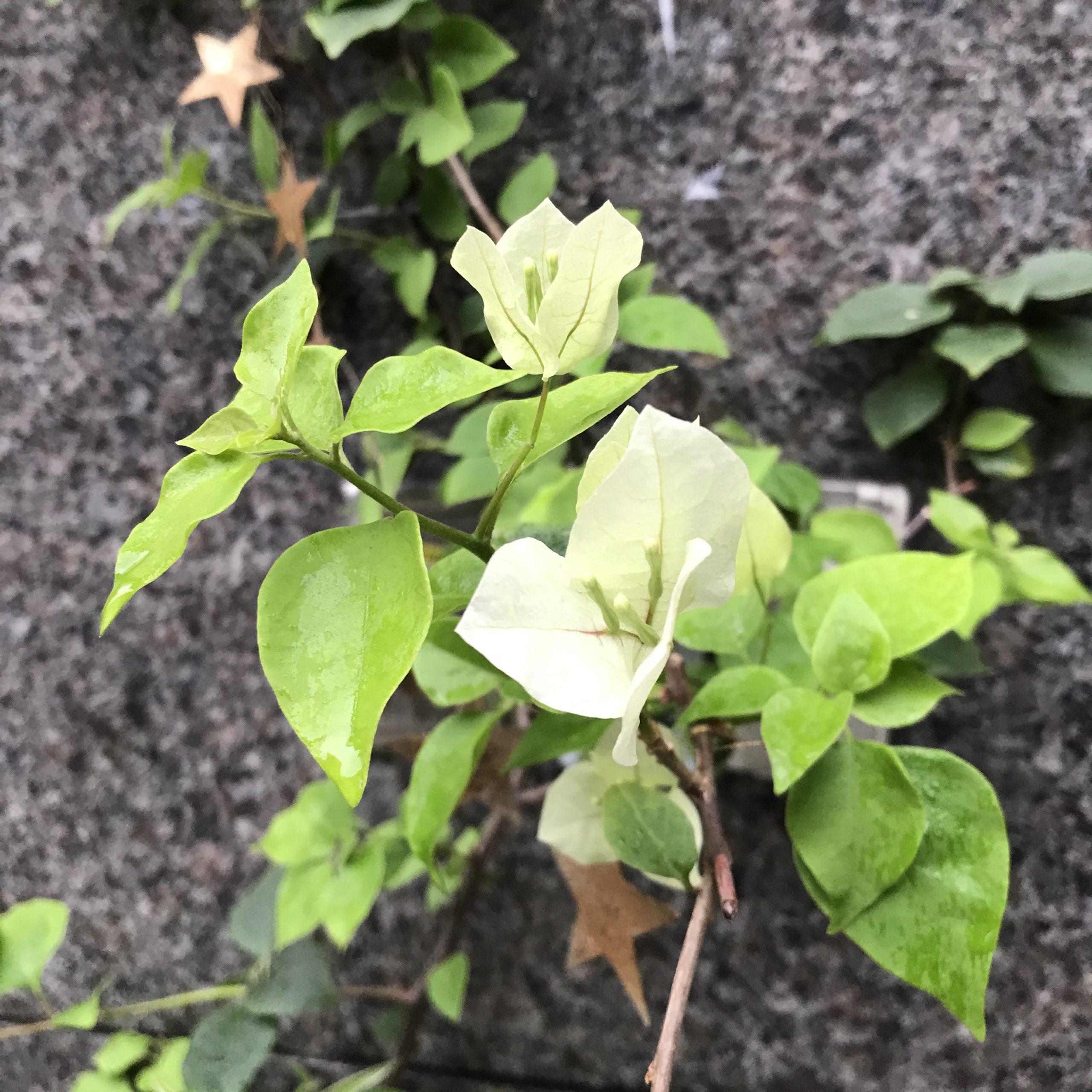 我的零廢棄生活-零廢棄盆栽